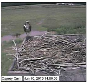 2013 Blackwater Osprey Cam egg
